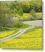 Spring Farm Landscape With Dandelion Bloom In Maine Metal Print