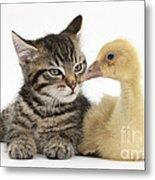 Tabby Kitten With Yellow Gosling Metal Print