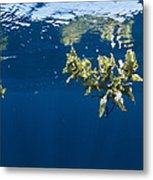 Tropical Seaweed Metal Print
