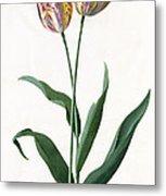 5 Tulip Tulip  Metal Print