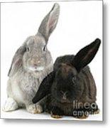 Two Rabbits Metal Print