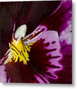 Exotic Orchids Of C Ribet Metal Print