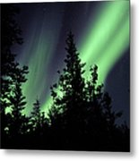 Aurora Borealis Above The Trees Metal Print