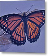 Butterfly Design Collection Metal Print