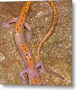 Cave Salamander Metal Print