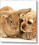 Cocker Spaniel And Rabbit Metal Print