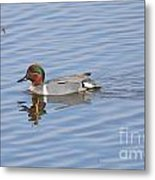 Green Wing Teal Metal Print