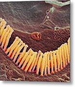 Inner Ear Hair Cells, Sem Metal Print