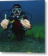 Invasive Seaweed Control Metal Print
