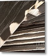 Red-bellied Woodpecker Feathers Metal Print