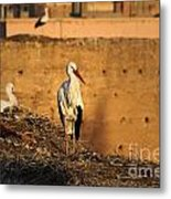 Storks In Marrakech Metal Print