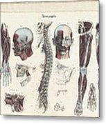 Anatomie Methodique Illustrations Metal Print