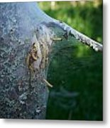 Bird-cherry Ermine Caterpillars Metal Print