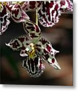 Exotic Orchids Of C Ribet Metal Print by C Ribet