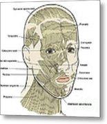 Illustration Of Facial Muscles Metal Print
