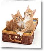 Kittens Metal Print