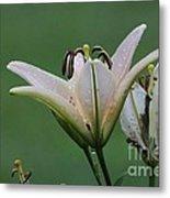 Lily Flowers Metal Print
