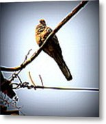 Lonely Bird Metal Print