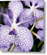 Orchid Flower Bloom Metal Print