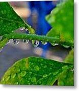 Raindrops On Leaf Metal Print