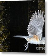 Tufted Titmouse In Flight Metal Print