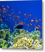 Underwater Landscape Metal Print