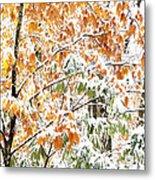 Autumn Snow Monongahela National Forest Metal Print