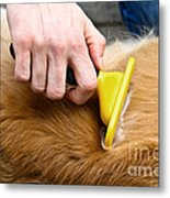 Dog Grooming Metal Print by Photo Researchers, Inc.