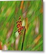 8- Dragonfly Metal Print