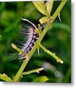 Hairy Caterpillar Metal Print