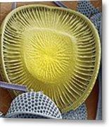 Diatom, Sem Metal Print