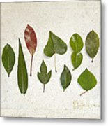 9 Leaves Metal Print