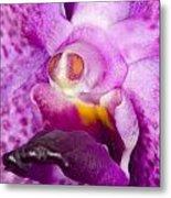 Orchid Flower Bloom Metal Print