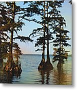 Reelfoot Lake Metal Print