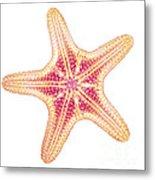 X-ray Of Starfish Metal Print