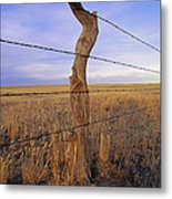 A Barbed Wire Fence Stretches Metal Print