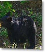 A Bear Cub Metal Print