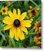 A Beautiful Close Up Of A Sunflower Metal Print