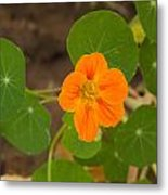 A Beautiful Orange Trumpet Shaped Flower With Green Leaves Metal Print