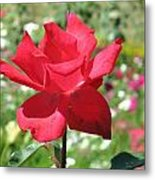 A Beautiful Red Flower Growing At Home Metal Print