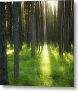A Beautiful Wooded Area Metal Print