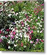 A Bed Of Beautiful Different Color Flowers Metal Print