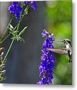 A Bird And A Bee Metal Print
