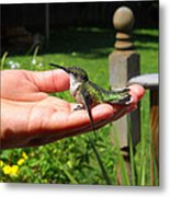 A Bird In The Hand. Metal Print