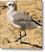 A Bird Of Many Colors Metal Print