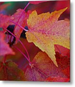 A Bit Of Yellow In A Sea Of Red Metal Print