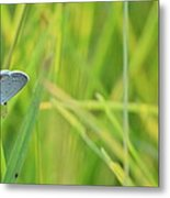 A Blue And Grass Metal Print