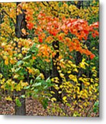A Blustery Autumn Day Metal Print