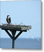 A Boat Watching Osprey Metal Print