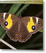 A Brightly Colored Brown And Yellow Metal Print